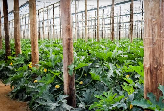 La propuesta de valor de Naturcharc: variedad de productos con garantía eco
